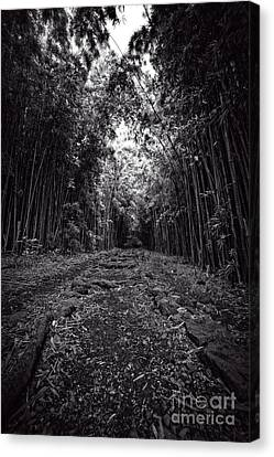 Natural Scenes Canvas Print - Pathway Through A Bamboo Forest Maui Hawaii by Edward Fielding