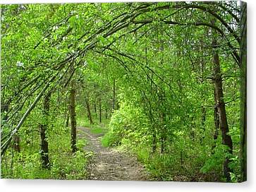 Pathway Through Nature's Bower Canvas Print