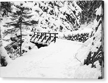 Pathway Through The Snow Canvas Print