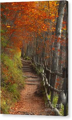Pathway To Autumn Canvas Print by Benanne Stiens