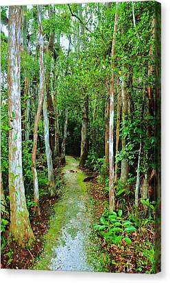 Pathway To The Rainforest Canvas Print by Kicking Bear  Productions