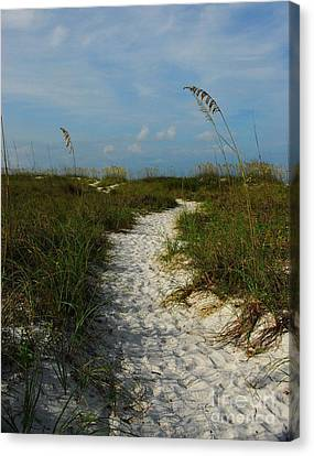 Pathway To The Sea Canvas Print by Mel Steinhauer