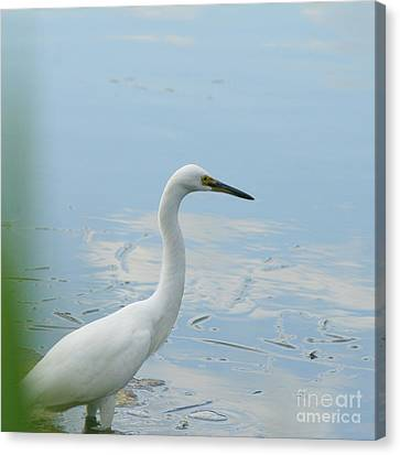 Patiently Wading  Canvas Print by Neal Eslinger
