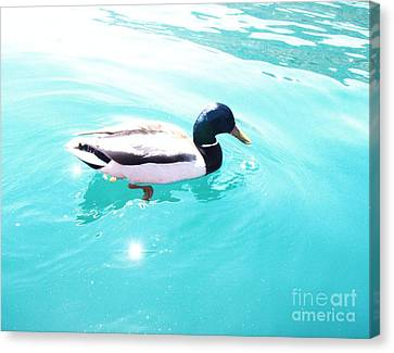 Canvas Print featuring the photograph Pato by Vanessa Palomino