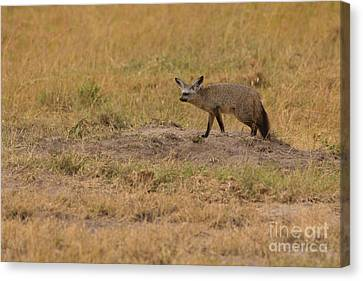 Bushy Tail Canvas Print - Patrolling Home Turf by Ashley Vincent
