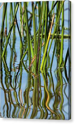 Patterns Amid The Reflection Of Reeds Canvas Print by Michael Qualls