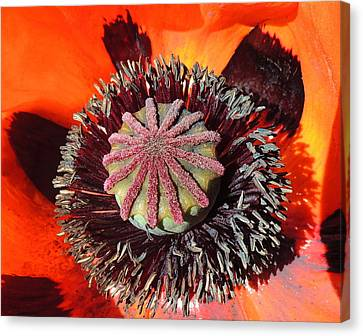 Patterns In Nature Canvas Print by Karen Horn