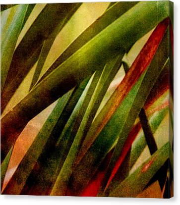 Patterns In Nature No.3 Canvas Print by Bonnie Bruno