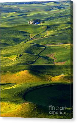 Patterns Of The Palouse Canvas Print by Mike Dawson