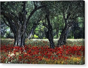 Pavot De Provence Canvas Print by Joachim G Pinkawa