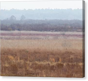Canvas Print featuring the photograph Paynes Prairie White Birds by Paul Rebmann