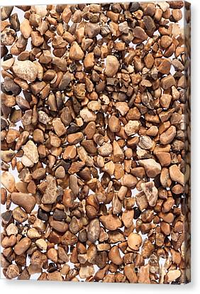 Pea Shingle Canvas Print by Peter Smith