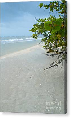 Peace And Quiet On Sanibel Island Canvas Print by Jennifer White