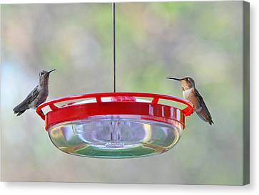 Peace At The Feeder Canvas Print by Lynn Bauer