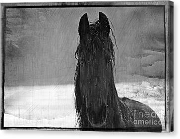 Peace In The Storm Canvas Print