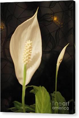 Peace  Lily Canvas Print by Ann Fellows