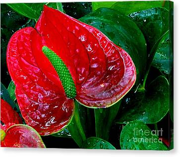Peace Lily Canvas Print by Nancy Mueller