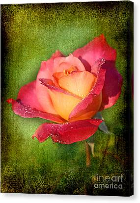 Peace Rose Canvas Print by Joan McCool