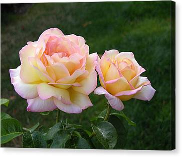 Peace Rose Canvas Print by Lynne Thibault