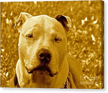 Peace To End Dog Fighting Canvas Print by Q's House of Art ArtandFinePhotography