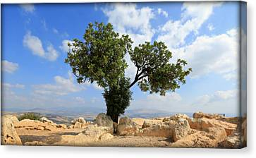 Peace Tree Canvas Print