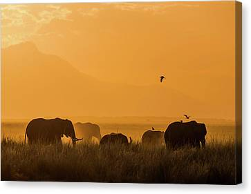 Yellow Elephant Canvas Print - Peace by Young Feng