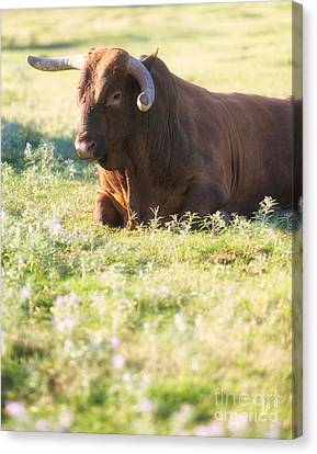 Canvas Print featuring the photograph Peaceful by Erika Weber
