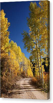 Peaceful Fall Road Canvas Print by Michael J Bauer