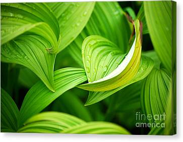 Canvas Print featuring the photograph Peaceful Green by Cynthia Lagoudakis