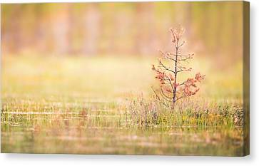 Peaceful Canvas Print by Janne Mankinen