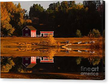 Peaceful Morning Canvas Print by Steven Reed