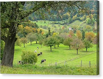 Peaceful Pasture Canvas Print by Ramona Murdock