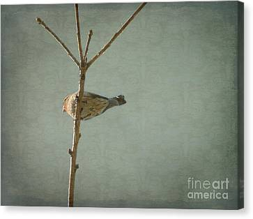 Peaceful Perch Canvas Print
