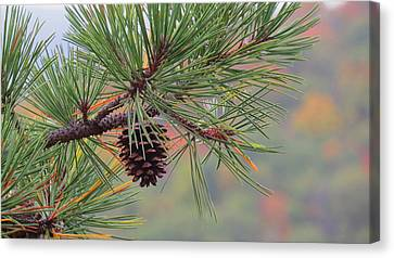 Peaceful Pinecone Canvas Print by Stephen Melcher
