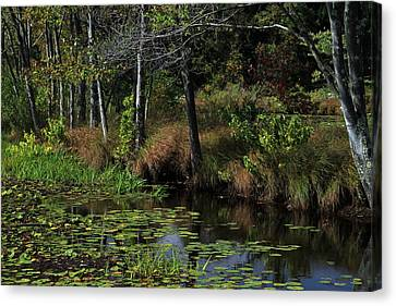 Peaceful Pond Canvas Print by Karol Livote