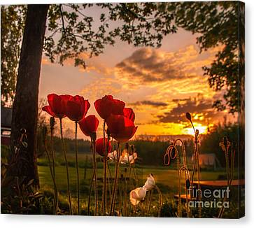 Peaceful Poppy Canvas Print by Rose-Maries Pictures