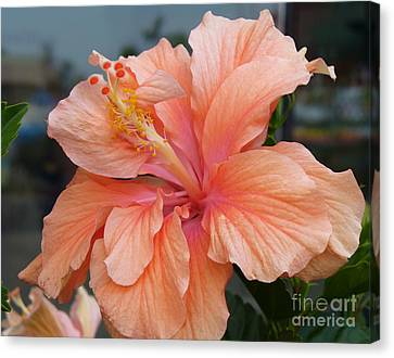 Canvas Print featuring the photograph Peach And Cream by Lingfai Leung
