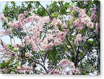 Peach Blossom Cassia Canvas Print by Andres LaBrada