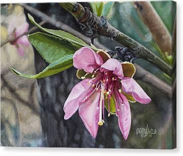 Peach Blossom Canvas Print by Joshua Martin