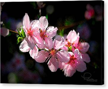 Canvas Print featuring the photograph Peach Blossoms by Ludwig Keck