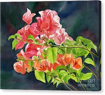 Peach Colored Bougainvillea With Dark Background Canvas Print