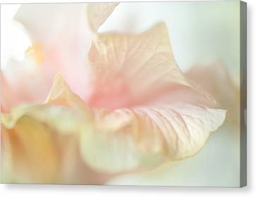 Peach Delicacy. Hibiscus Macro Canvas Print by Jenny Rainbow