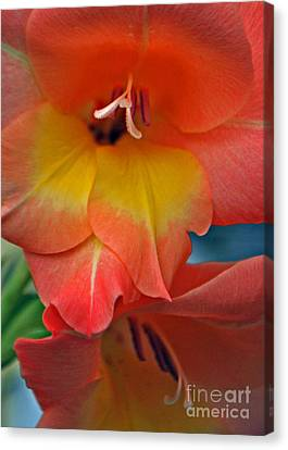 Peach Glads  Canvas Print