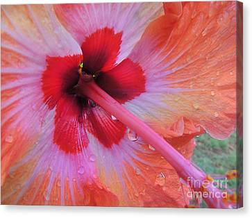 Peach Hibiscus Canvas Print by Kristine Merc