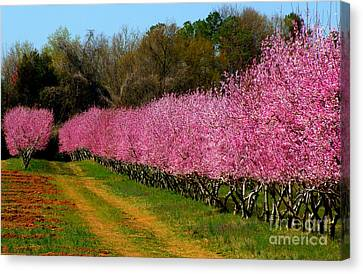 Canvas Print featuring the photograph Peach Orchard In Carolina by Lydia Holly