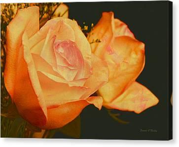 Peach Roses  Canvas Print by Sandi OReilly