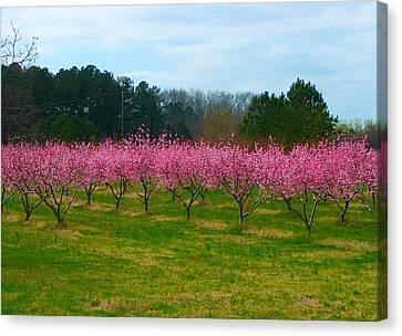 Peach Tree Grove By Jan Marvin Canvas Print