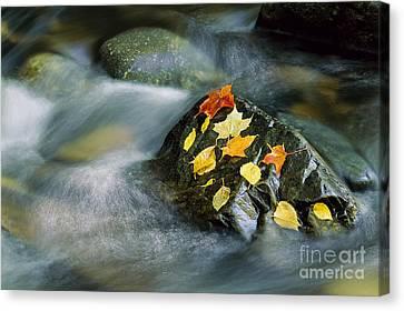 Peacham Brook In Fall Canvas Print by Alan L Graham