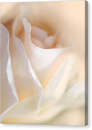 Peaches And Cream Rose Flower Canvas Print by Jennie Marie Schell