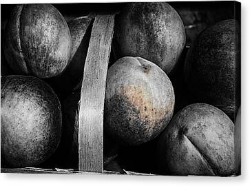 Peaches In A Basket Canvas Print by William Jones